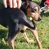 Timmy- 5/14/2012- Joscelyn Milstone