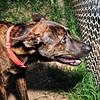 Bowen - 9/28/2012 - Laura Westcott