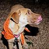 Theodore - 11/1/2012 - Laura Westcott