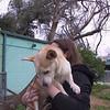 Elvis2, Jan30, 2012, TrishaMcLaughlin