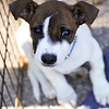 Jack Pup - 11/25/12 - Meredith Maples
