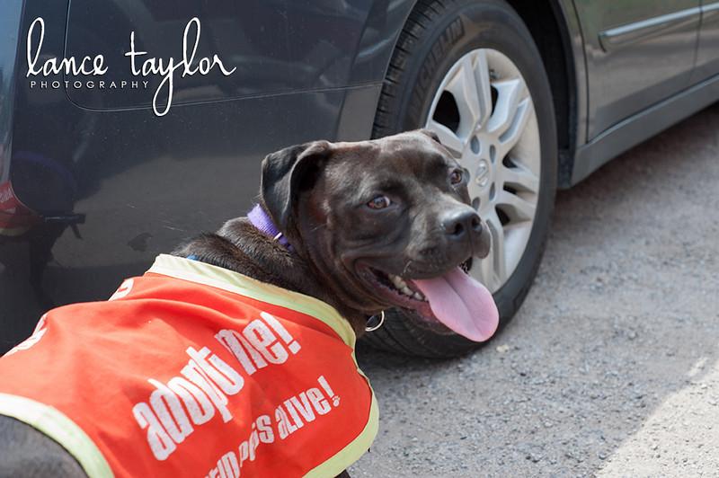 Betty - 4/12/12 - Lance Taylor