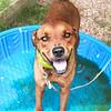 Brownie (#140) - 07/09/2012-  Jordan Zatopek