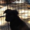Nessa-3/4/2012-Christina Minjares