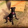 Dog:  Adrian, 2/28/2013<br /> Claire Greenlea