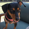 Zoey - 7/31/13 - Marcia Chan