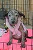 Clarice Pup 1 - 12/1/13 - Kathi Miller