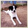 Snoopy - 2/09/13 - Katherine A