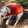 Charlie Brown - 12/11/12 - Karen Hardwick