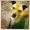 Elsie 1 - 2/13/13 - Katherine A