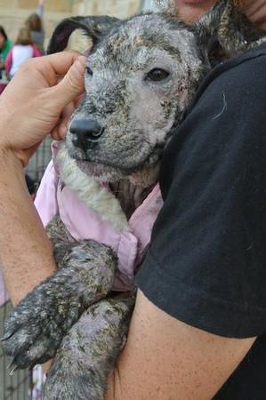 Clarice Pup 3 - 12/1/13 - Kathi Miller