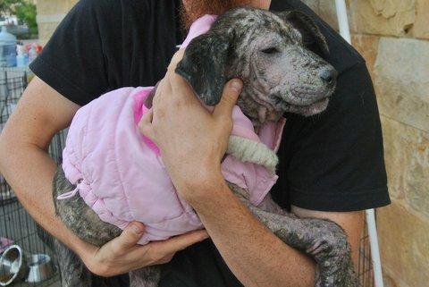 Clarice Pup 2 - 12/1/13 - Kathi Miller