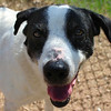 Snoopy - 2/19/13 - Karen Hardwick
