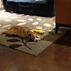 Apogee sleeping with his wobie.
