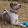 Roxy - 12/26/12 - Karen Hardwick