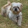 Buster - 11/13/12 - Karen Hardwick