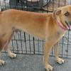 Linus 1 - 9/13/13 - Kathi Miller