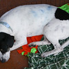 Franklin (Oreo) - 12/2/12 - Meredith Maples