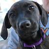 Lola - 12/11/12 - Karen Hardwick