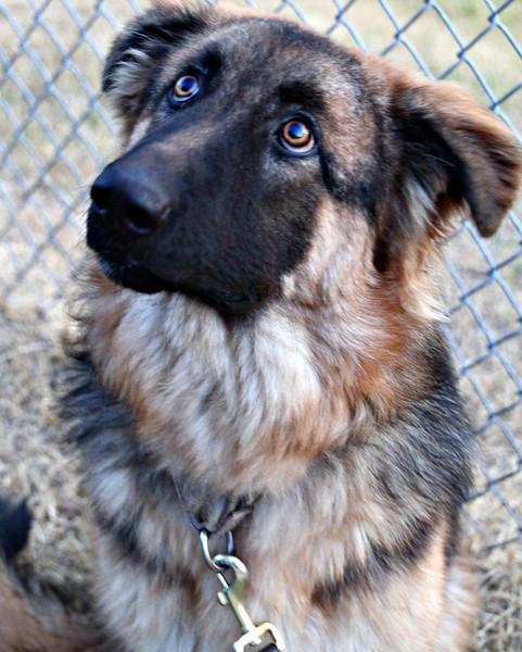 Max -- 11/29/2012 -- Summer Huggins