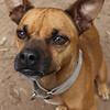 Buddy - 11/13/12 - Karen Hardwick