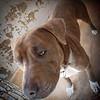Gage - 3/28/13 - Chloe