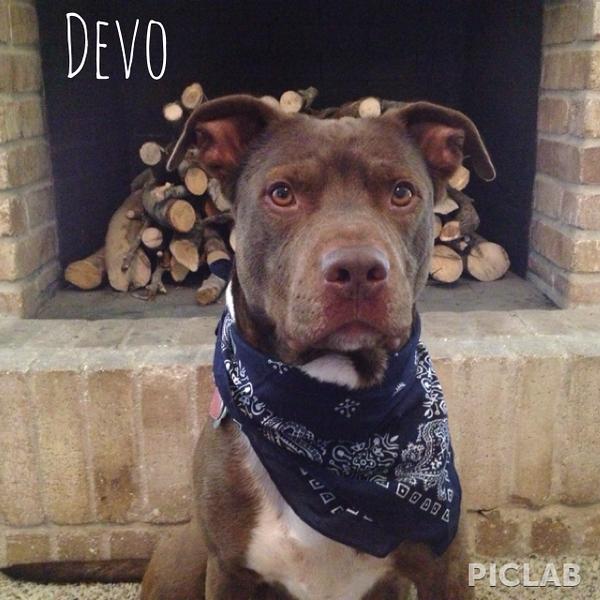 Devo - 6/8/13 - Katy Pierce
