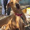 Copper - 10 March 2013 - Zanne R. Tarlow