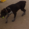 Finnegan - 6.26.13 - Matt Margerison/Renee Cauvin<br /> <br /> Finnegan loves to play ball!