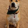 Rocco - 12/29/12 - Karen Hardwick