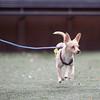 Frankie - 11/6/14 - Rosie