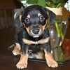 Zachery - 8/25/14 - for foster