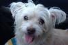 Sassy - 8/4/14 - Melinda Maclean (for foster)