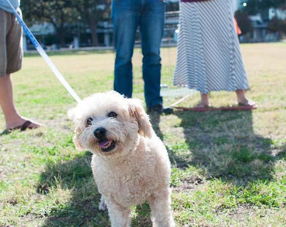 Sassy - 12/6/14 - Kerstin Wiggins (Foster Adoption Event)