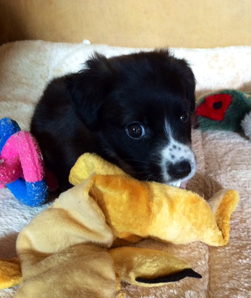 Tinkerbell - 10/14/14 - for foster