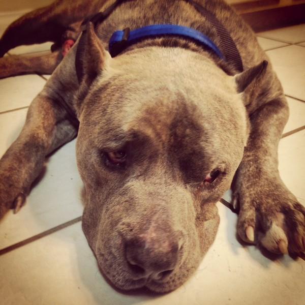 Zeus - 12/15/14 - for foster