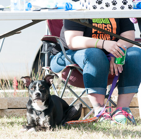 Coco - 12/6/14 - Kerstin Wiggins (Foster Adoption Event)