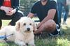 Sassy - 12/6/14 - Kerstin Wiggins (Foster Adoption Event )