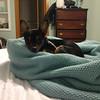 Yogi - 11/27/14 - for foster