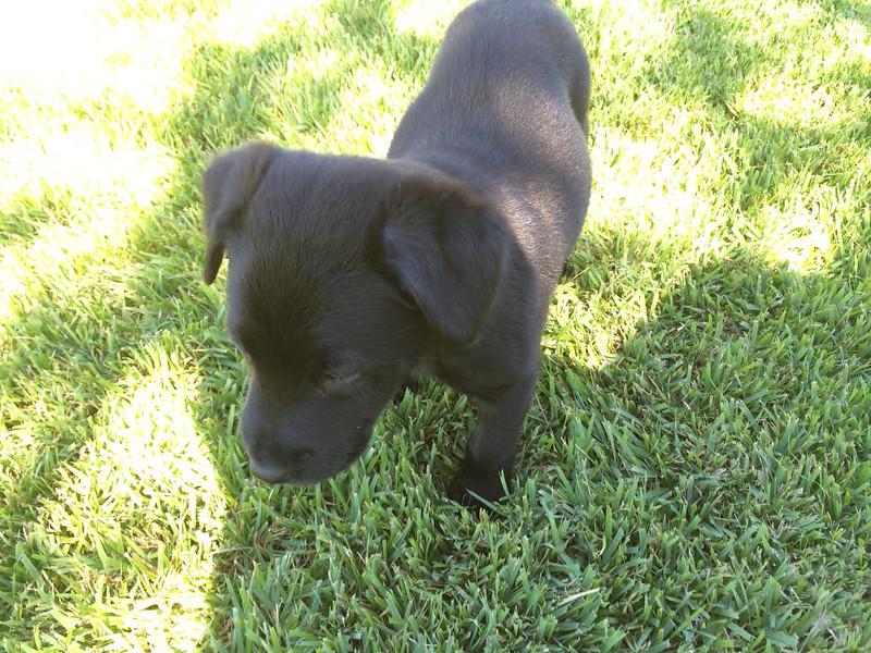 Violet - 10/5/14 - for foster