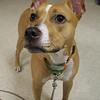 Jordan Pup - 9/14/14 - Karen Hardwick