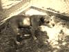 Fannie - 061112 - victoriabrooks