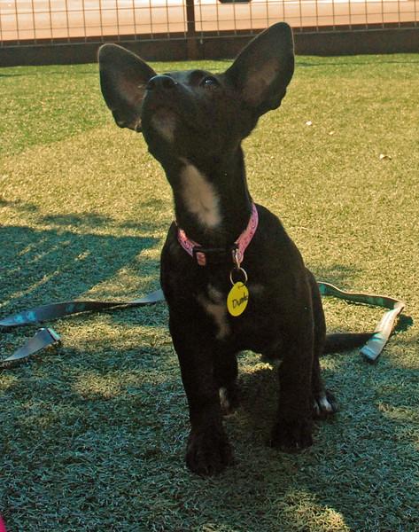 Dumbo - 8/14/14 - Paula Taylor