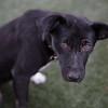 Lexie - 11/6/14 - Rosie