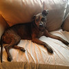 Madelyn - 8/17/14 - Melinda Maclean (for foster)