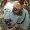 Patches - 07.17.14 - Cheri Linwood