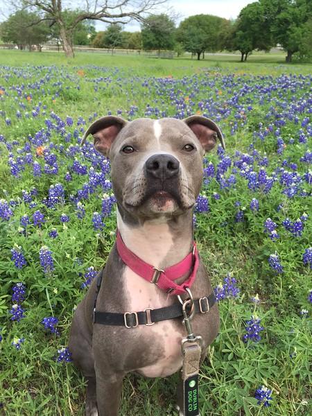 Tyson - 4/4/2015 - Heather Jafar