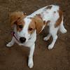Little Lulu - 4/10/15 - Karen Hardwick