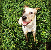 Kenny - 6/30/2015 - for foster