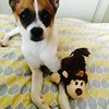 Cody 5/5/2015 - for foster